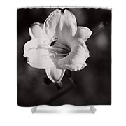 Out Of Darkness Into Light - Wbw Shower Curtain