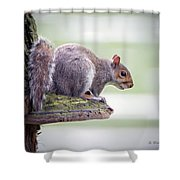 Out On A Ledge Shower Curtain