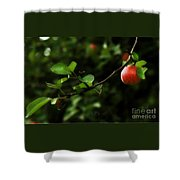 Out On A Limb  A Tempting Photograph Of A Tasty Ripe Red Apple On A Tree  Shower Curtain