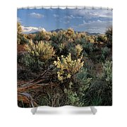 Out On The Mesa 7 Shower Curtain