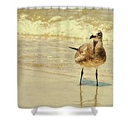 Outerbanks Gull Shower Curtain