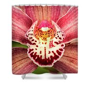 Outstanding Orchid Shower Curtain