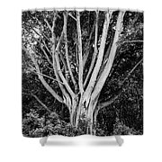 Outstretched Shower Curtain