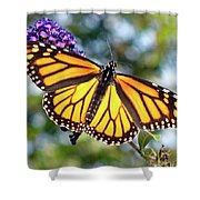 Outstretched Monarch Shower Curtain