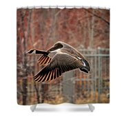Outta Here  Shower Curtain