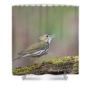 Ovenbird Shower Curtain