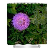 Over A Thistle Shower Curtain
