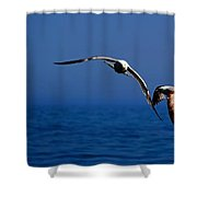 Over The Gull We Go Shower Curtain