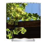 Overhead Grape Harvest - Summertime Dreaming Of Fine Wines Shower Curtain