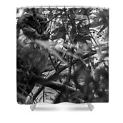Owl-1-bw Shower Curtain