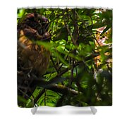 Owl-1 Shower Curtain by Fabio Giannini