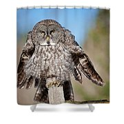 Owl 4 Shower Curtain