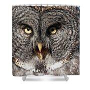 Owl 6 Shower Curtain
