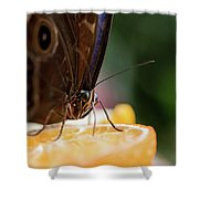 Owl Butterfly Feeding On An Orange Shower Curtain
