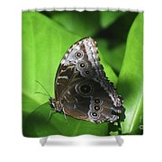 Owl Butterfly On A Cluster Of Green Leaves Shower Curtain