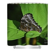 Owl Butterfly With Fantastic Distinctive Eyespots  Shower Curtain