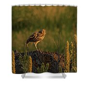 Owl Dancing At Dusk Shower Curtain