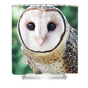 Owl Insight Shower Curtain