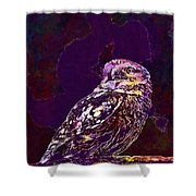 Owl Little Owl Bird Animal  Shower Curtain