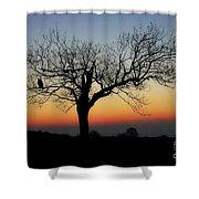 Owl Sunset Shower Curtain
