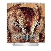 Owl Who? -brown Owl Shower Curtain