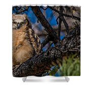 Owlet In A Fir Tree Shower Curtain