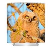Owlet In A Spring Sunrise Shower Curtain