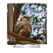 Owlet Lookout Shower Curtain