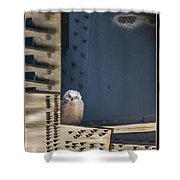 Owls And Trestles Shower Curtain