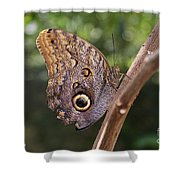 Owls Don't Always Have Feathers Shower Curtain