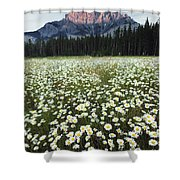 Ox-eyed Daisies And Cascade Mountain Shower Curtain