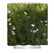 Oxeye Daisies Shower Curtain