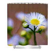 Oxeye Daisy - Paint Shower Curtain