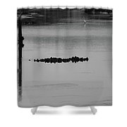 Oyster Bed Gator Shower Curtain