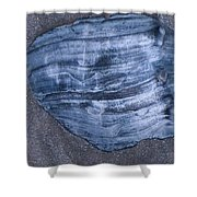 Oyster Shell Shower Curtain
