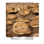 Oysters Shower Curtain