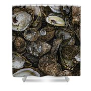 Oysters Two Shower Curtain
