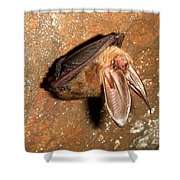 Ozark Big-ear Bat Shower Curtain