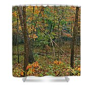 Ozark Forest In Fall 2 Shower Curtain