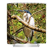 P2024983 Black Crowned Night Heron Shower Curtain