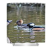 Pa And Ma Hooded Mergansers Shower Curtain
