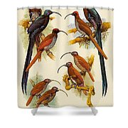 pa FB WilliamTCooper LesserBirdsOfParadise Penny Olsen Shower Curtain