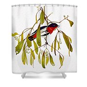 pa TonyOliver AustralianBirds 13 MistletoeBird Tony Oliver Shower Curtain
