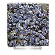 Pacific Blue Mussels Shower Curtain