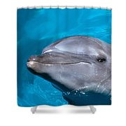 Pacific Bottlenose Dolphi Shower Curtain
