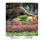 Pacific Grove Deer Feeding Shower Curtain