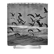 Pacific Gulls Shower Curtain