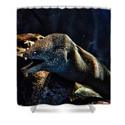 Pacific Moray Eel Shower Curtain