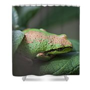 Pacific Treefrog Siesta Shower Curtain