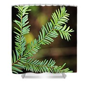Pacific Yew Shower Curtain